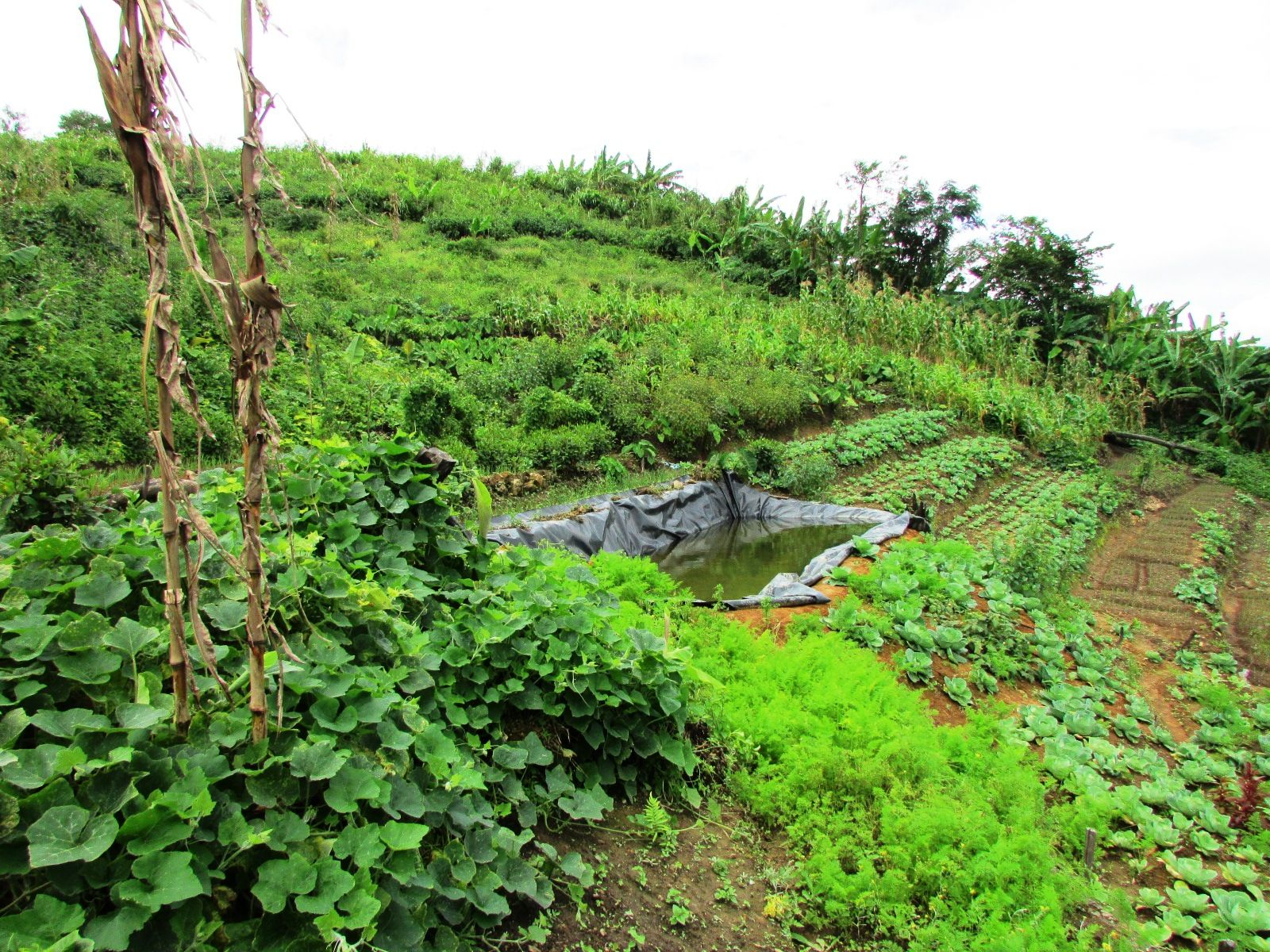 Hasil gambar untuk Integrated Farming System